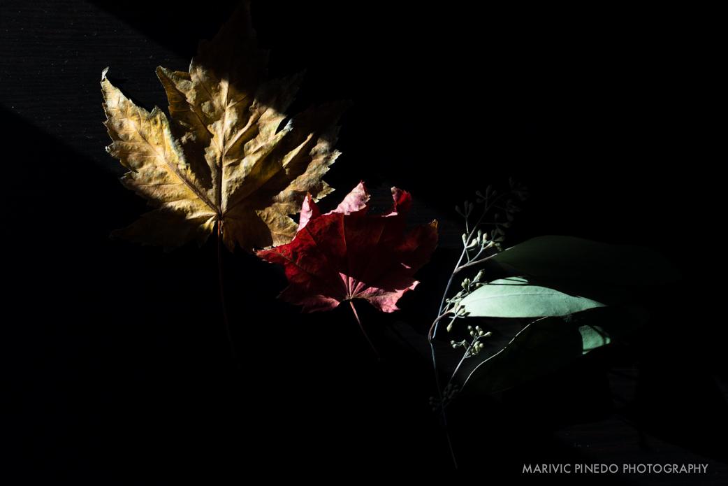 Plants Dec 2015 - SM-2