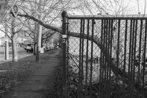 Trees-n-things-SM-(01.06.16)-6