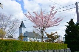 Cherry-Blossoms-2017-SM-15
